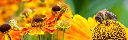 Küchenrückwand Blumen und Bienen auf Acrylglas